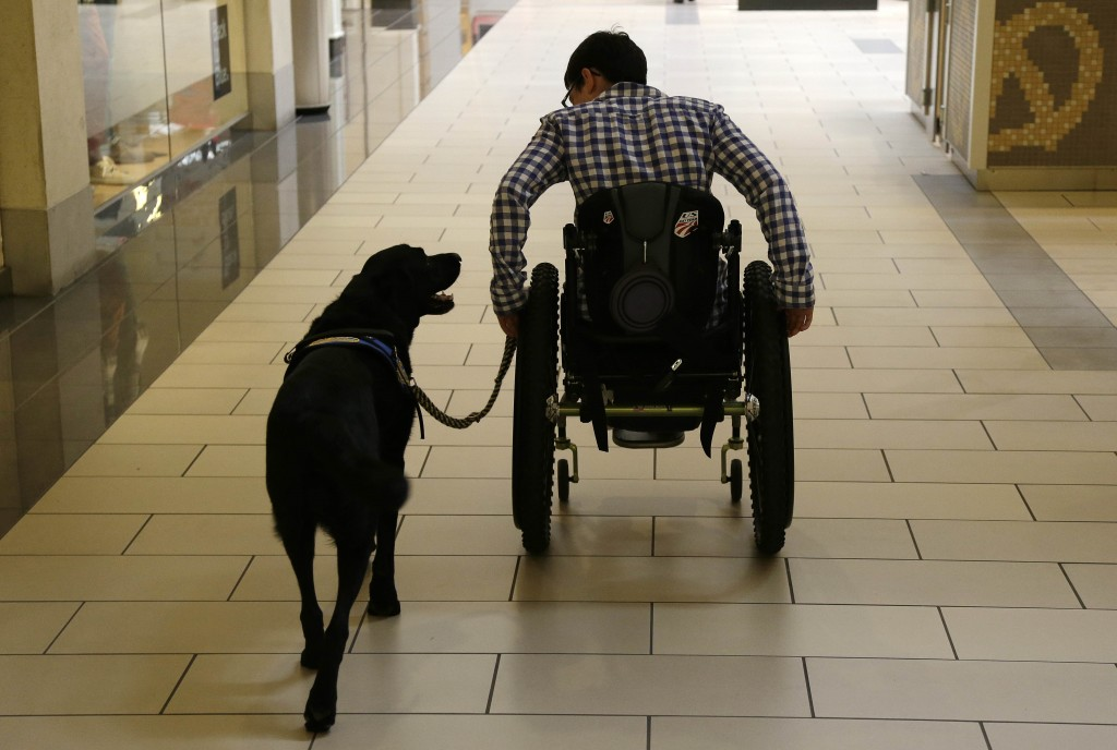 "FILE - In this Oct. 8, 2013 file photo, Wallis Brozman is aided by her service dog Caspin while going through a shopping mall in Santa Rosa, Calif. Other victims of unruly fake service dogs are real service dogs, said Brozman, 27, of Santa Rosa. She has dystonia, a movement disorder that left her unable to walk and barely able to talk. She needs a wheelchair, voice amplifier and her service dog who responds to English and sign language. ""When my dog is attacked by an aggressive dog, he is not sure what to do about it and looks to me. It becomes a safety issue, not only for my dog, the target of the attack, but me if I am between the dogs,"" Brozman said. (AP Photo/Eric Risberg, File)"