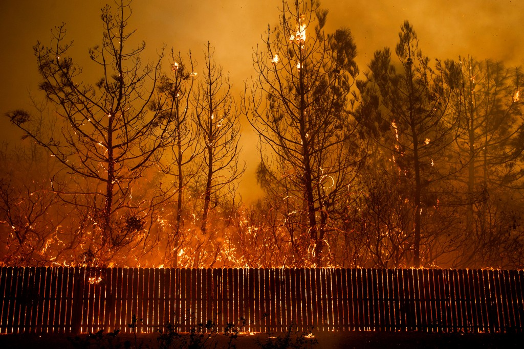FILE - In this Nov. 8, 2018 file photo, flames climb trees as the Camp Fire tears through Paradise, Calif. A federal hazard tree-removal program will remove destroyed trees from last year's deadly Camp Fire that remain on private property and could fall on public roads and facilities. But the Chico Enterprise-Record reports that the Federal Emergency Management Agency program will not take down trees that could fall on homes. Some arborists have estimated there are half a million to a million burned trees remaining from the fire that wiped out 14,000 homes and killed 85 last November. (AP Photo/Noah Berger, File)